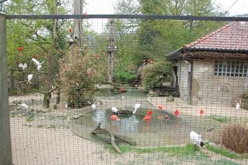 Zoo Osnabruck d50 2012 166
