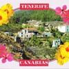 tenerife canaries