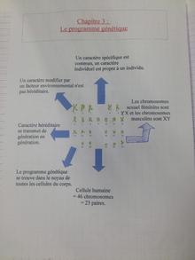 carte mentale 3ème programme génétique