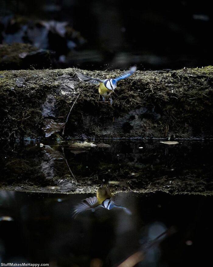 Joachim Munter prend des photos d'animaux sauvages comme s'ils étaient des modèles professionnels, et nous ne pouvons pas arrêter de les admirer