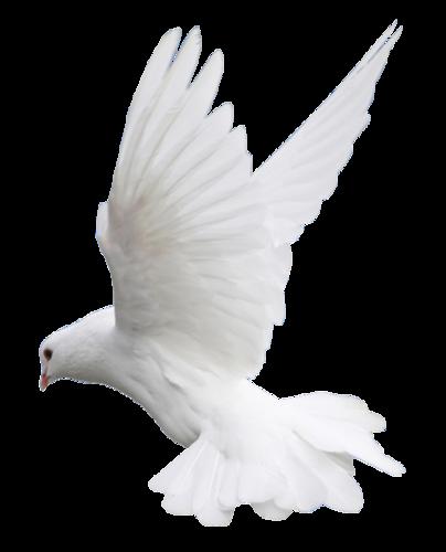 Colombes et Pigeons Série 4