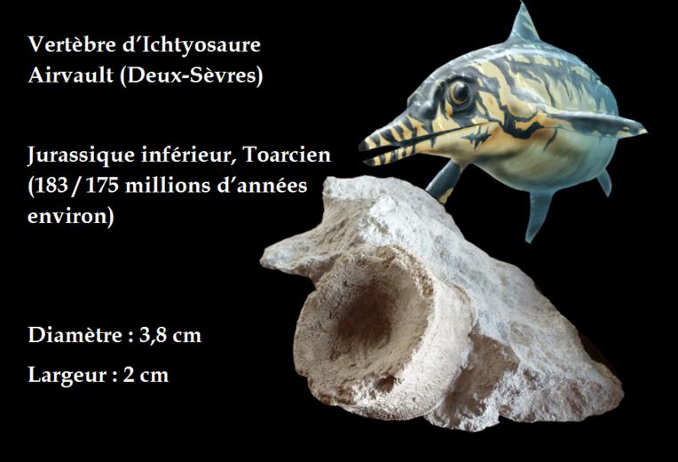 Ictyosaure Airvault fiche