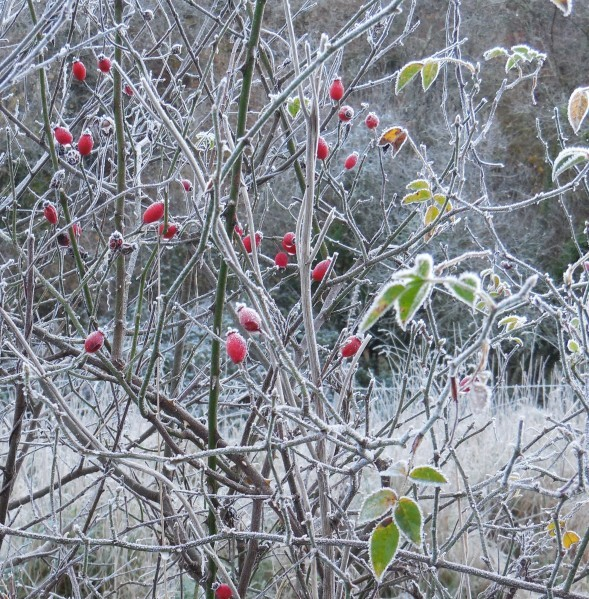 matin de glace.4