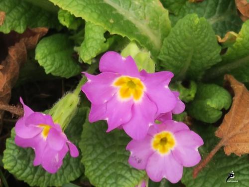 Les premières fleurs de l'année