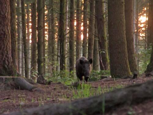 Observation de la faune sauvage