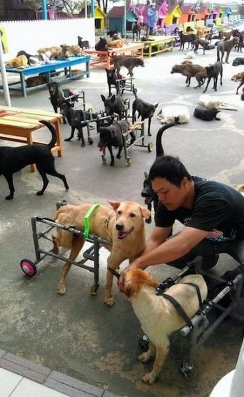 (-*♥*-) Cette famille bienveillante consacre sa vie à aider plus de 3000 chiens errants. (-*♥-)