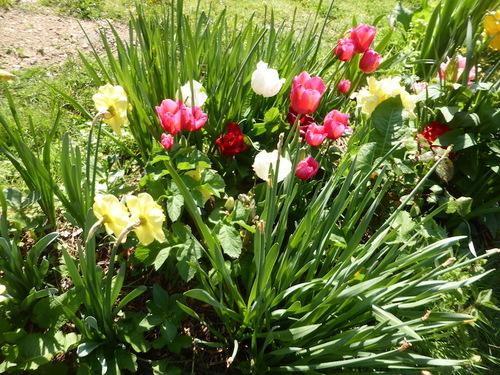- Quelques fleurs pour ce dimanche -