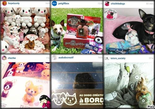 FAVORIS | Instagram Juin 2015 - Shopping Dog