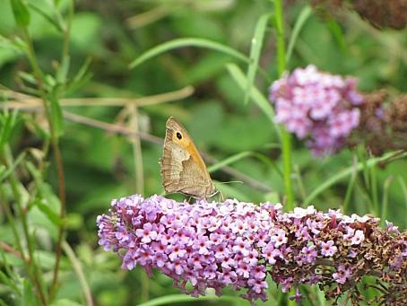 les-papillons-5529.JPG