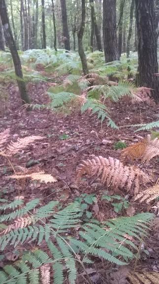 L'automne dans le petit bois - 1