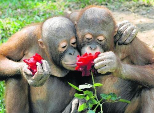 L'amour de l'animal
