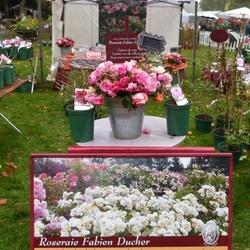 Les journées des plantes de Courson-Chantilly...