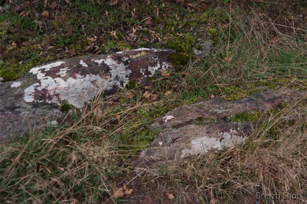 En forêt de Brocéliande, la roche affleure