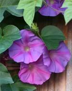 La ronde des fleurs