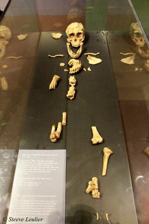 Selam australopithèque âgée de 3,4 millions d'années