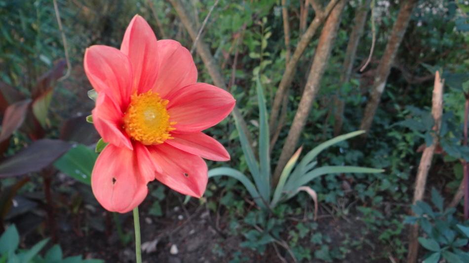 Les Fleurs du Moment !!