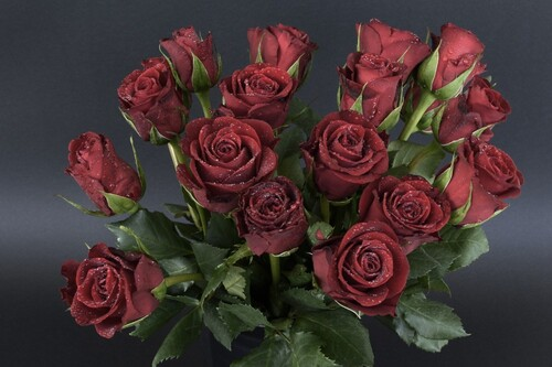 Roses rouges