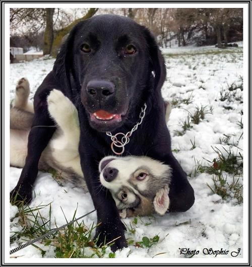 A la découverte des autres races de chiens (février 2015)