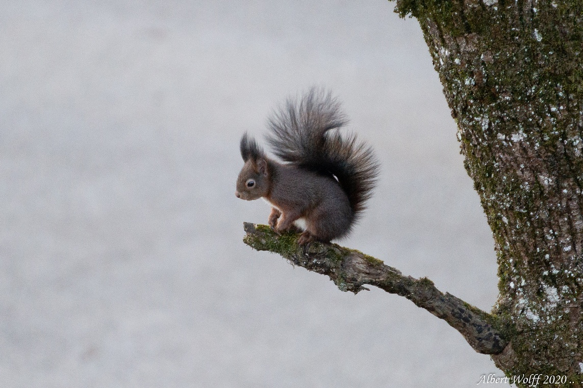 La promenade de l'écureuil