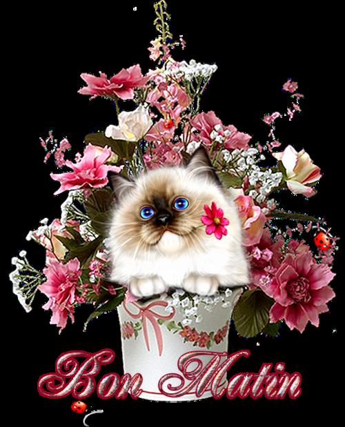 Bouquets de minous et toutous