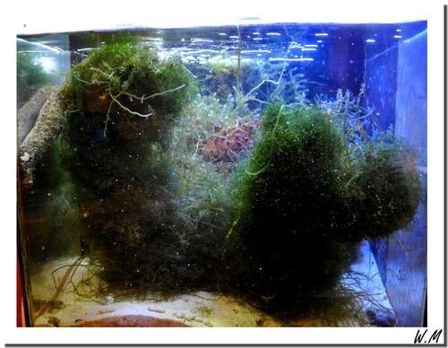 Refuge à coraux mous