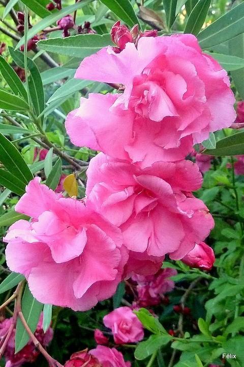 z01 - Fleurs