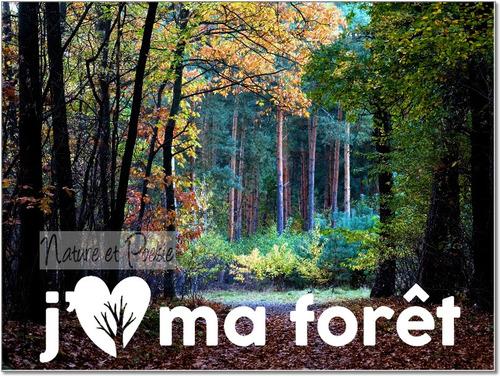 J'aime ma forêt