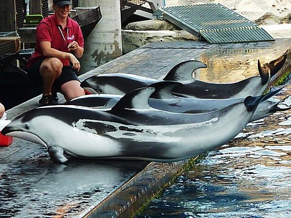 Jour 28 Vancouver aquarium dauphins 3