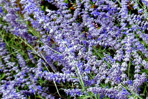 Des fleurs bleues !