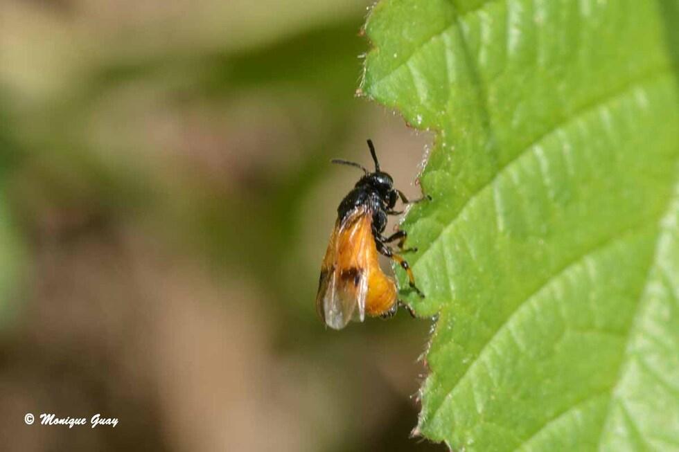 Insectes en zoom