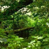 Dans les bois .
