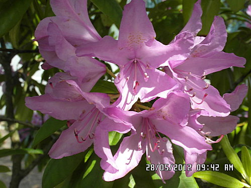fleurs-28-Mai-004.JPG