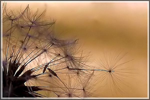 Faisceaux de soie