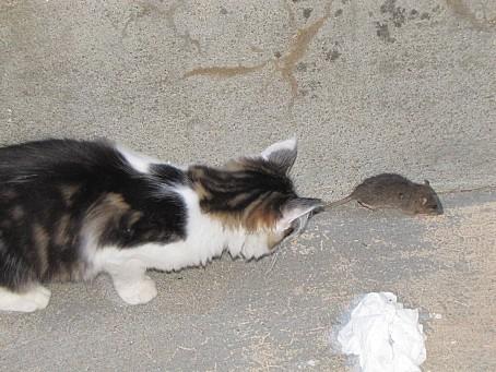 mes-animaux-de-compagnie-et-les-animaux-de-la-nature-6737.JPG
