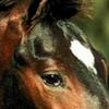 juju-chevaux