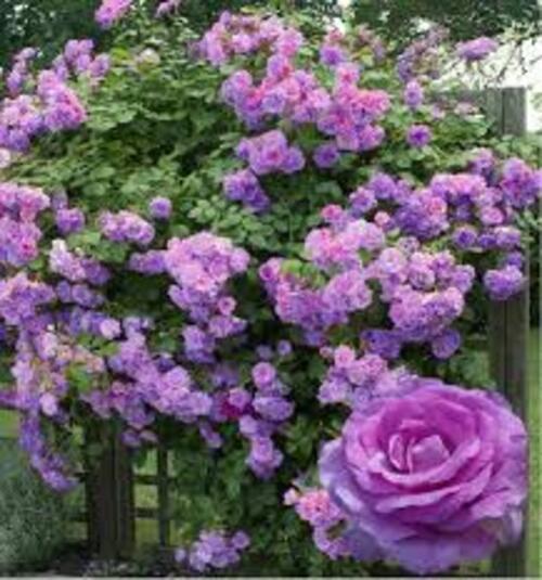 Opération fleurs...