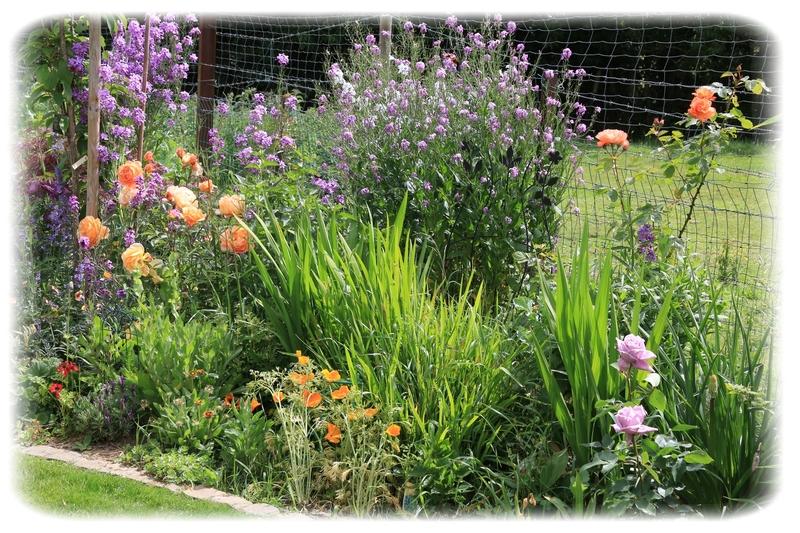Petite scène de jardin : le massif Orange - Mauve