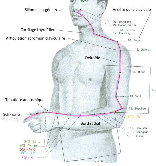 """Résultat de recherche d'images pour """"point méridien du gros intestin"""""""