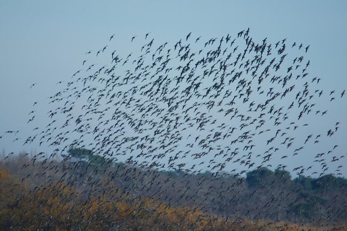 oiseaux en vol