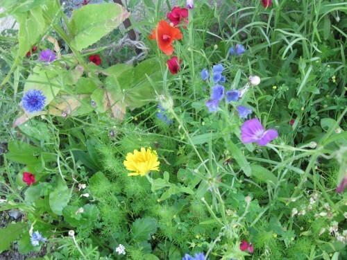 fleurs-multicolores.JPG