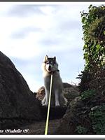 Laïka (plus de 3 ans)