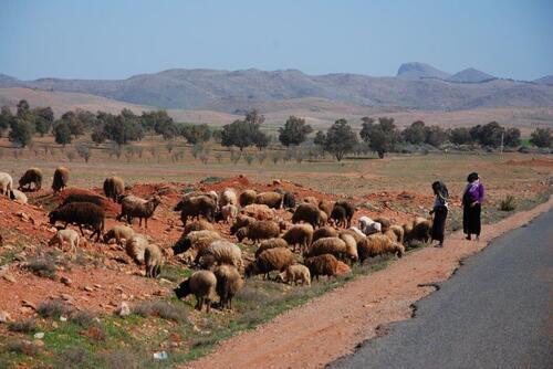 encore un troupeau