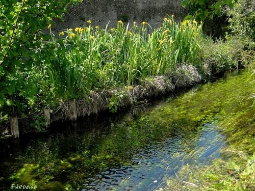 Le long du canal des Malcontents