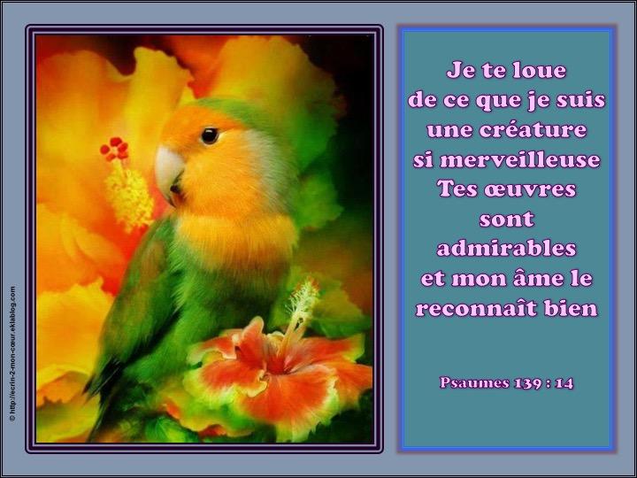 Je te loue de ce que je suis une créature si merveilleuse - Psaumes 139 : 14