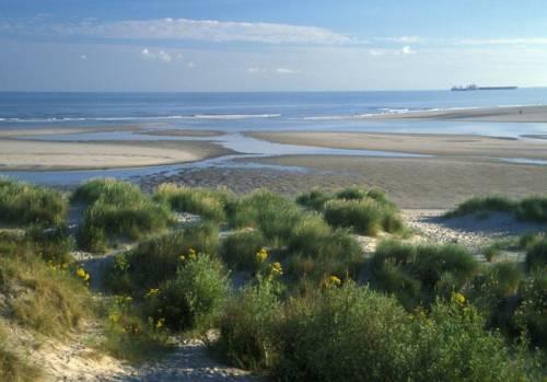 Les Dunes