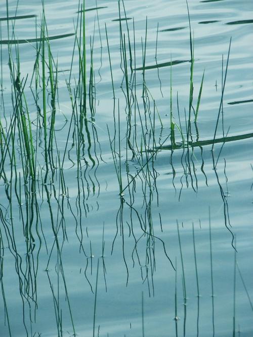 Reflets dans l'onde