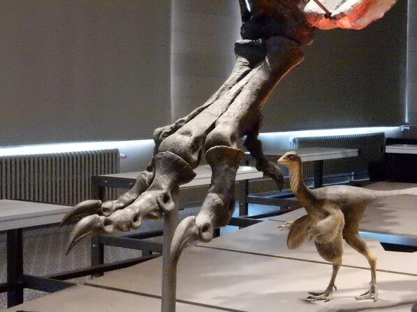 Galérie des dinosaures