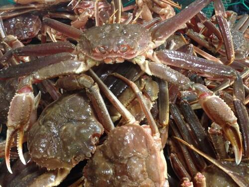 Sauvés par un crabe ?