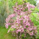 Fleurs des deux jardins - Juillet 2020 - Wegeglia