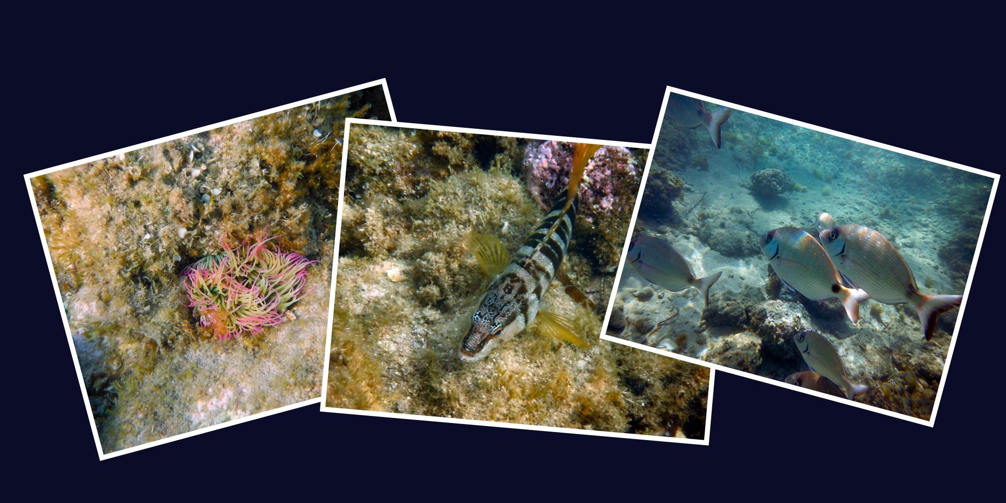http://ekladata.com/TYcjQkwLdQ09IAmv1dCbwyH3mnY/diapo-snorkeling.jpg